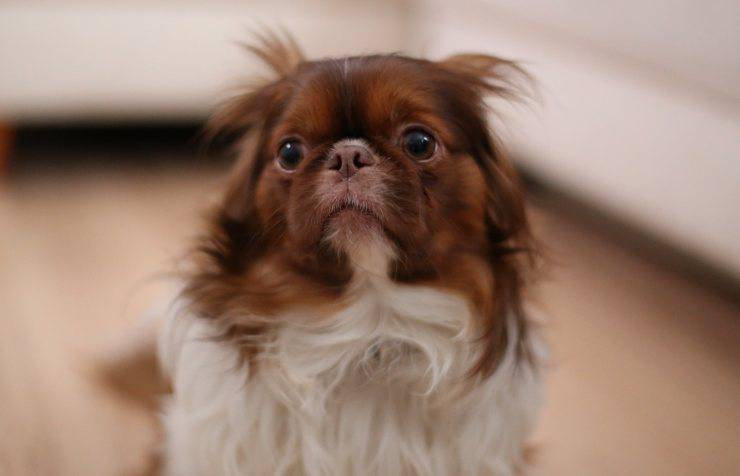 cucciolo preoccupato (Foto Pixabay)