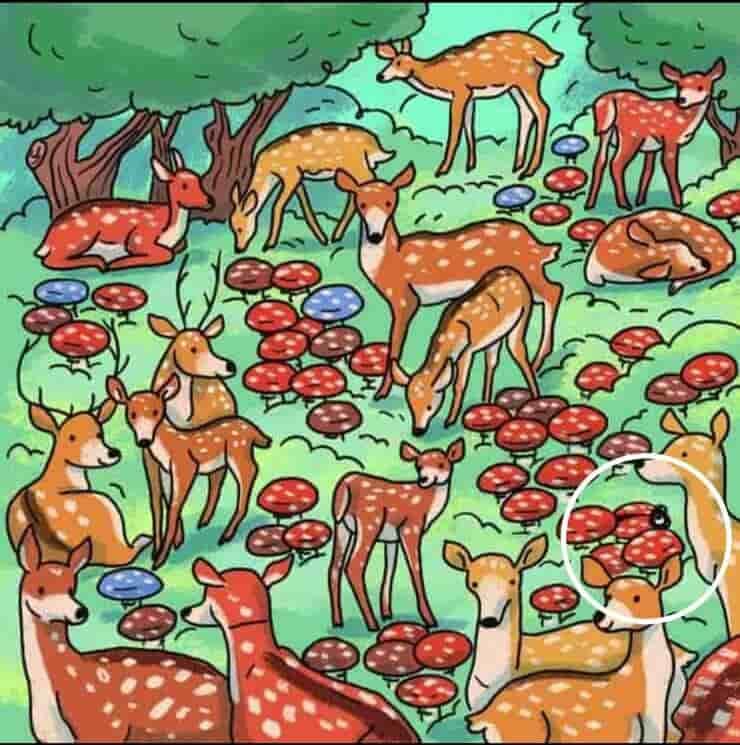 Soluzione del test visivo del bosco