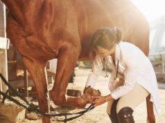 talloni del cavallo