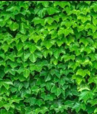 Il test visivo difficilissimo trova la rana tra le foglie