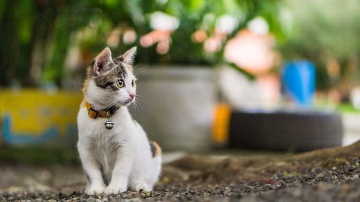 ventroflessione del collo nel gatto