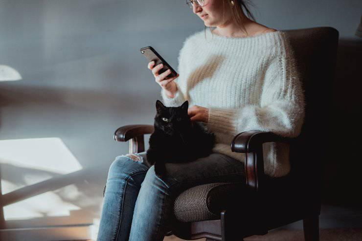 Perché il gatto non sopporta il telefono