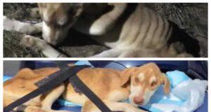 Cucciolo ferito e malato ritrovato sotto una roulotte (Screen Facebook)