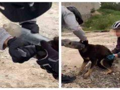 Il cucciolo viene liberato dalla bottiglia sul suo musetto (Screen video)