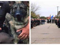 L'accoglienza al cane poliziotto appena dimesso dalla clinica (Screen Facebook)