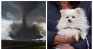 Pom Pom cagnolino salvo dal tornado (Screen Pinterest e Facebook)