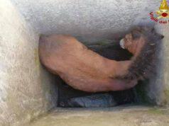 Puledrino incastrato nel pozzo (Screen Facebook)