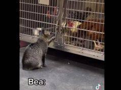 Gatto accarezza pazienti ospedale veterinario