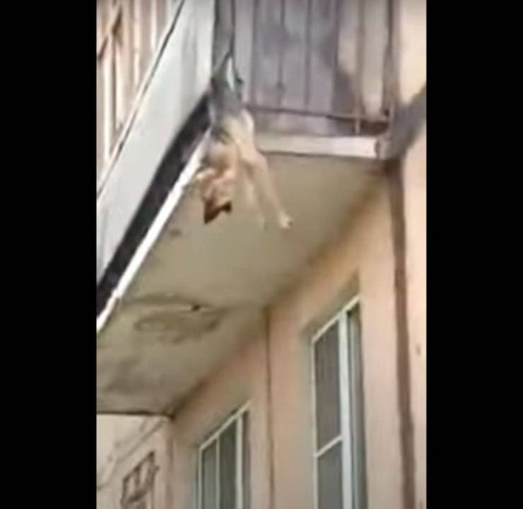 cane getta balcone incastrato ringhiera