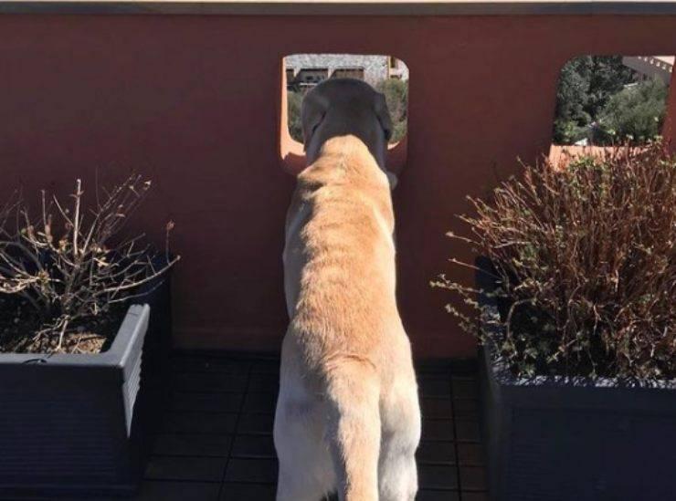 Casper, il cane di Claudio Bisio