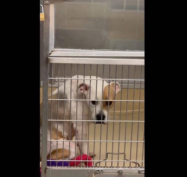 cane rocky riconsegnato rifugio