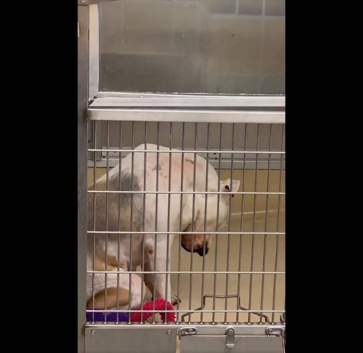 cane riportato rifugio quarta volta