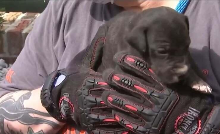 20 cani in condizioni pessime salvati dall'appartamento (Screen Video)