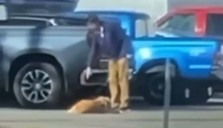 25enne prende a pugni il cane ma il video lo inchioda (Screen Video)