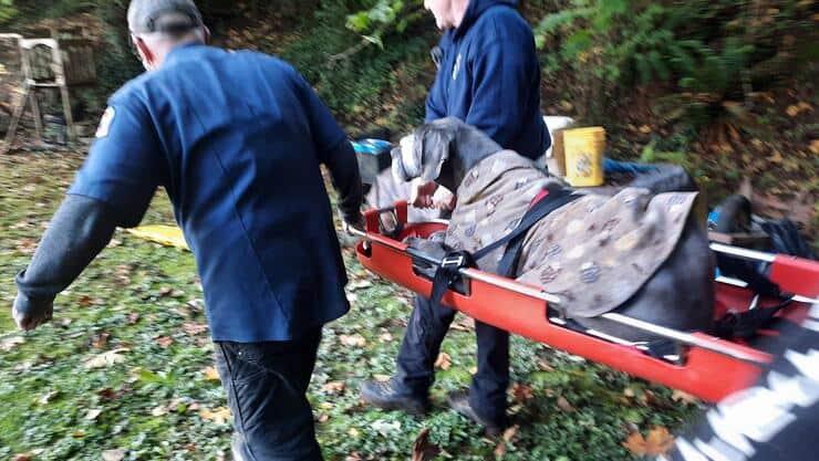 Cane precipita in un dirupo soccorritori fanno di tutto per salvarlo (Foto Facebook)