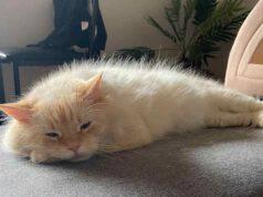 gatto triste (Foto Facebook)
