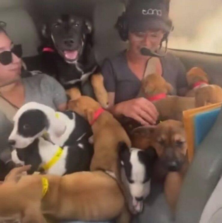 27 cuccioli portati in salvo con un piccolo aereo (Screen video)