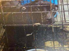 Oltre 300 animali sfollati da un rifugio dopo che la proprietaria è stata accusata di crudeltà nei confronti degli animali (Foto Facebook)