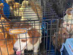 45 cuccioli salvati