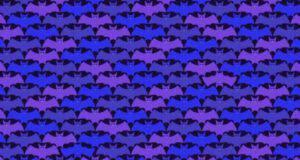 Il test visivo dei pipistrelli diversi , solo il 2% riesce a vederli
