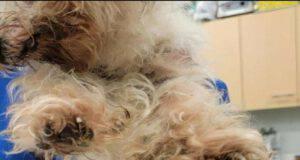 Minni la cucciola trovata in condizioni deplorevoli (Foto Facebook)