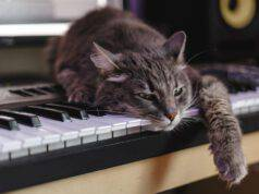 Musicoterapia per gatti