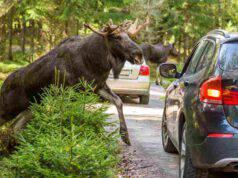 Danni provocati da animali selvatici: chi paga?