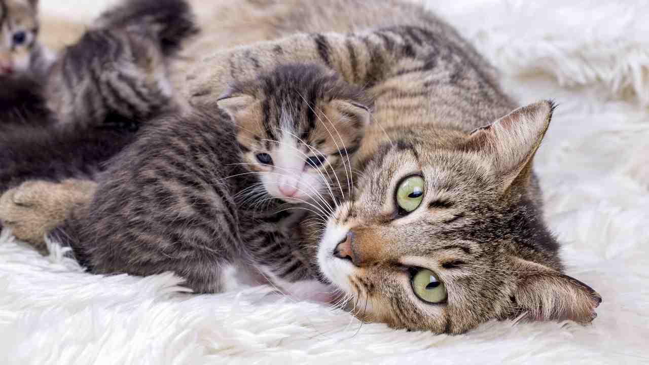 I riflessi tonali nel gattino