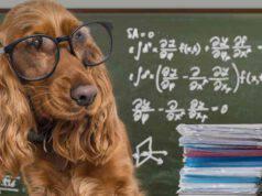 Cani geniali