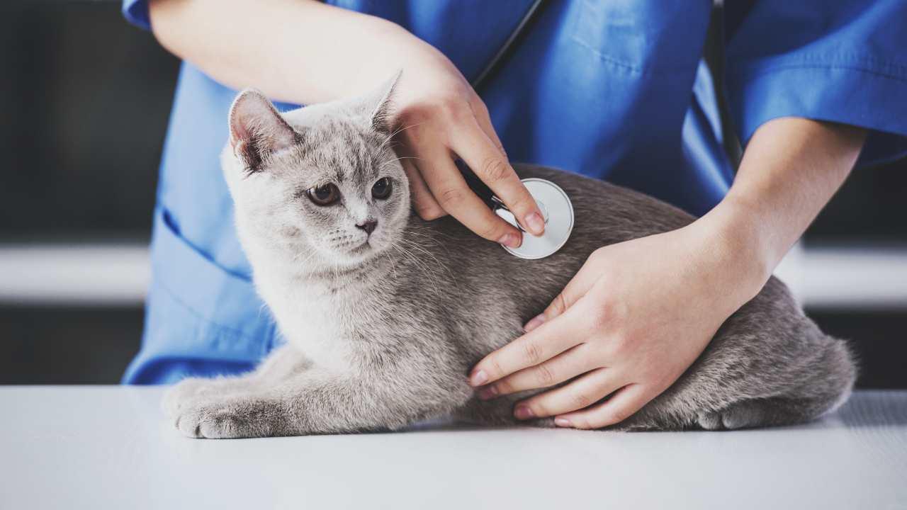 L'iperkaliemia nel gatto