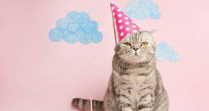 I prodotti più strani per i gatti
