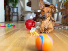 Il cane ha paura della palla