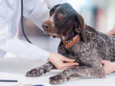 L'ipernatriemia nel cane