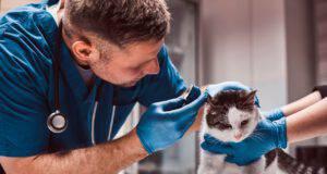 Come scegliere il veterinario per il tuo gatto