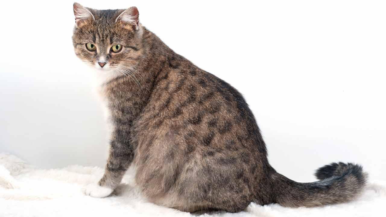 Gravidanza indesiderata nel gatto
