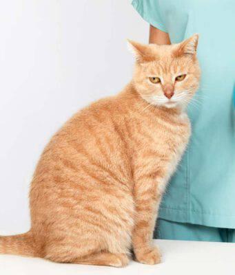 L'iponatriemia nel gatto