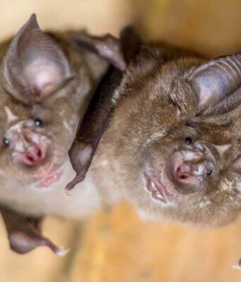 I pipistrelli e la legge