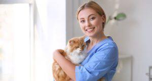 l gatto nell'anagrafe degli animali d'affezione in Basilicata
