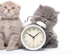 Orologio biologico del gatto