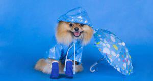 I prodotti più strani per i cani