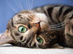 Il gatto nell'anagrafe degli animali d'affezione nelle Marche