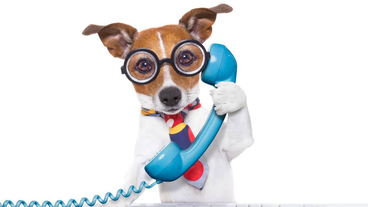 Fino a che distanza i cani possono comunicare?
