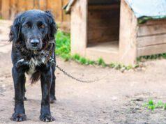 In Toscana è legale tenere il cane alla catena?