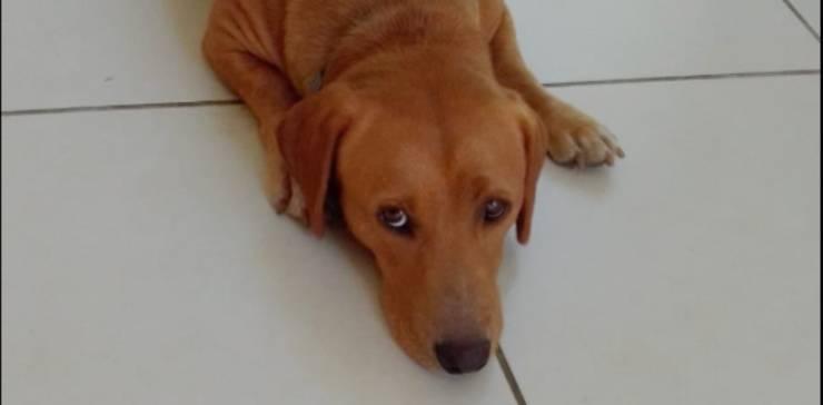Aron, cucciolo abbandonato dopo la separazione