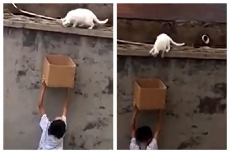 Bimbo cerca di salvare il micino (Screen video)