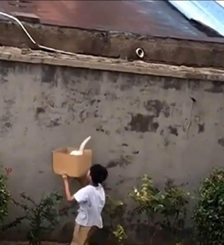 Bimbo salva il micino (Screen video)