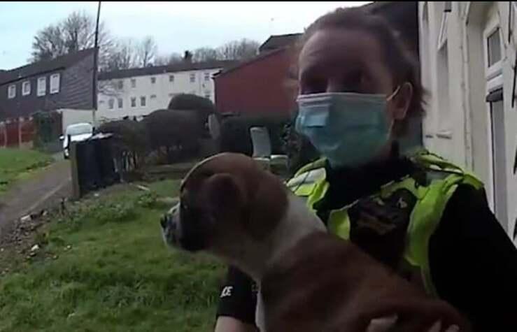 Cane rapito durante un furto ritrovato nel guardino di una donna (Screen Video)