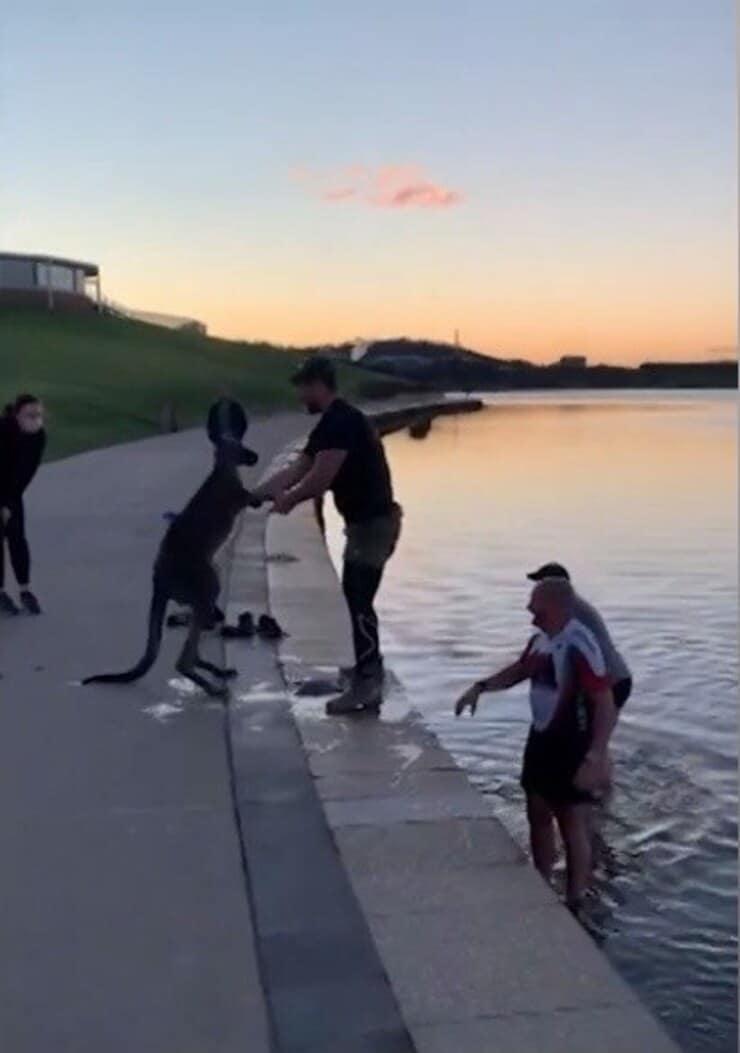 Canguro finalmente in salvo (Screen video)