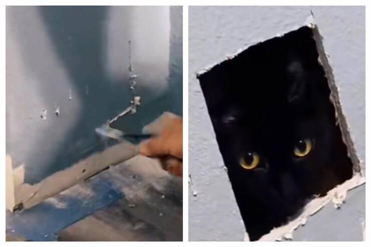 Gatto nel muro del bagno (Screen video)