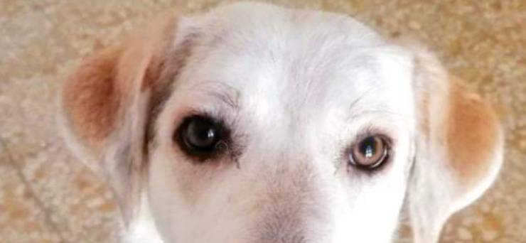 Gli occhi di Sansone ancora pieni di amore